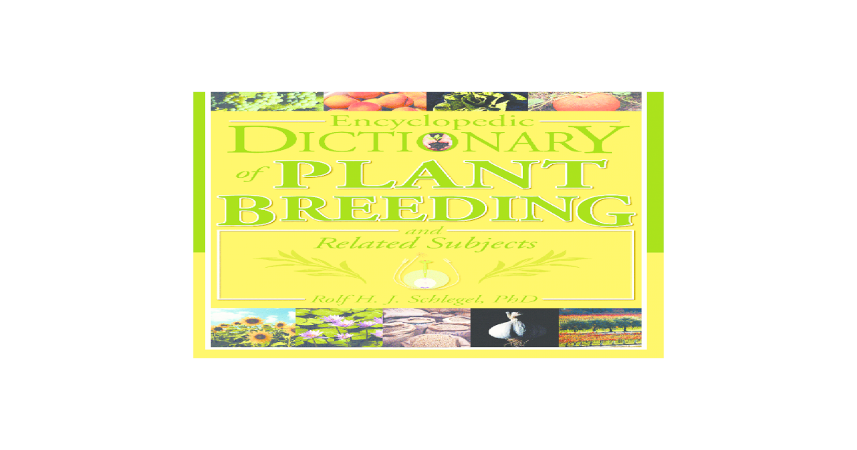 25 Décorative Argent Tipped blé GRAINES DE FLEURS//annuel//Triticum triticale