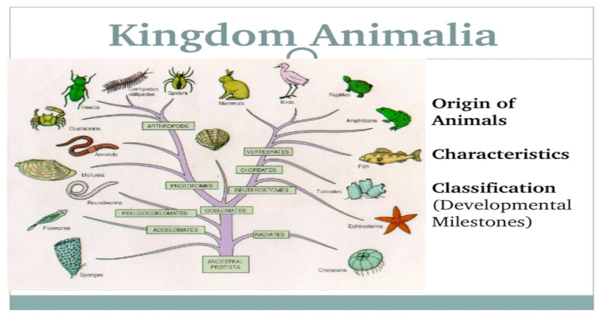 Kingdom Animalia Origin of Animals Characteristics ...