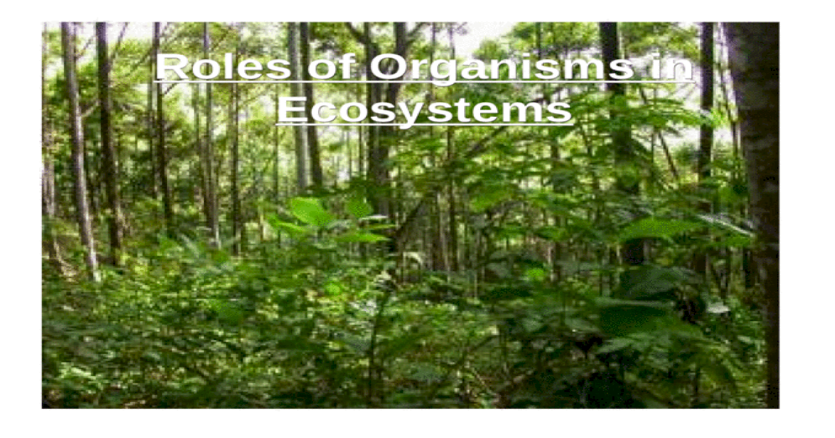 Roles of Organisms in Ecosystems - PPT Powerpoint